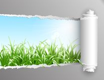 Torn paper with grass background. Royalty Free Stock Photo
