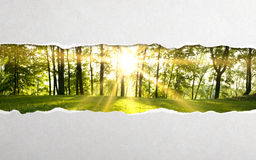 Torn paper. And green forest background stock images