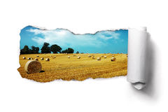 Torn paper over a summer hay bale field landscape. Tearing a paper frame hole to reveal hay bale field landscape Royalty Free Stock Photography