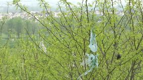 Torn platic bag on the tree. Plastic bag pollution stock video