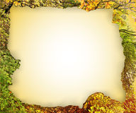 Torn vintage frame from autumn leaves Stock Photo
