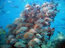 Tornade tropicale Photographie stock libre de droits
