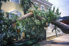 Tornado damage, downed tree between two houses, Alexandria, VA Royalty Free Stock Images