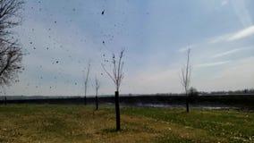 Tornado del humo y de la ceniza, espiral del humo, remolino de polvo que sale del campo quemado del prado que arde C?mara lenta metrajes