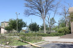 After the Tornado. The effects of a tornado. Trees are uprooted. Graves covered with limbs. Roots exposed. Branches are broken Royalty Free Stock Photography