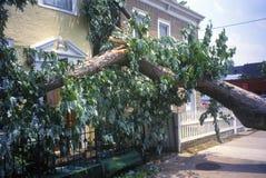 Tornadoschade, verslagen boom tussen twee huizen, Alexandrië, VA Royalty-vrije Stock Afbeeldingen