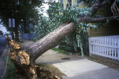 Tornadoschade, verslagen boom tussen twee huizen, Alexandrië, VA royalty-vrije stock afbeelding