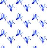 Torne iridescente a ilustração tirada mão da pintura do vetor da aquarela da flor, teste padrão floral sem emenda, textura azul p ilustração stock