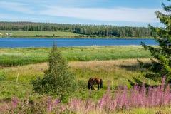 Torne rzeczna dolina, Szwecja Obrazy Royalty Free