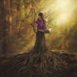 Torneado en un árbol Imagenes de archivo