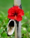 Torneira de água de bambu decorada com flor Foto de Stock Royalty Free