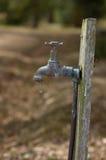 Torneira de gotejamento Imagens de Stock