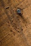 Tornillo con las virutas de madera Fotografía de archivo libre de regalías