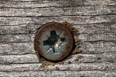 Tornillo de madera Foto de archivo libre de regalías