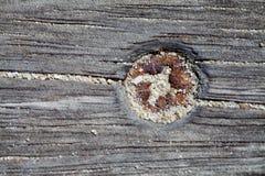 Tornillo oxidado Fotografía de archivo