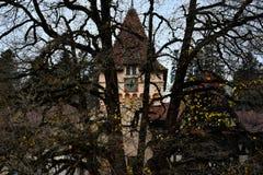 Tornklocka och träd royaltyfria foton