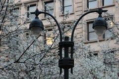 Tornlampor i gatan som har blommor i bakgrund Royaltyfria Foton