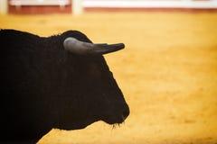 Toro coraggioso in una corrida immagini stock