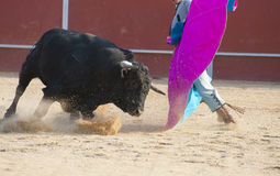 Toro di combattimento Fotografie Stock Libere da Diritti