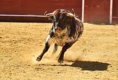Toro enojado en España con los cuernos grandes foto de archivo libre de regalías