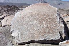 Toro muerto - Peru Royaltyfria Foton