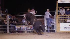 Toro negro que salta con un jinete del toro almacen de metraje de vídeo