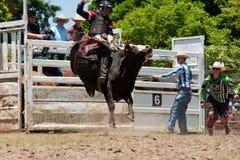 Toro peligroso del montar a caballo del vaquero Imágenes de archivo libres de regalías