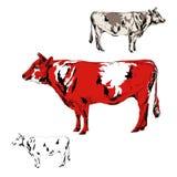 Toro rosso Fotografia Stock Libera da Diritti