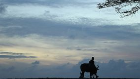 Toro in Tailandia stock footage