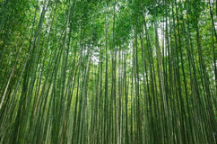 Torokko saga bamboo forest. Take the photo on 1-May-2017 in Torokko saga Stock Photos