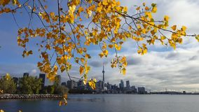Toronto Autumn. Fall colors in Downtown Toronto