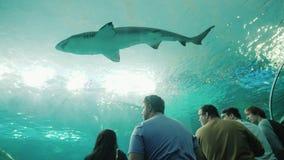 Toronto, Canada, octobre 2017 : Un requin énorme flotte au-dessus des visiteurs de l'oceanarium Les gens dans le verre transparen banque de vidéos