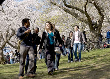 Toronto - Cherry Blossom Festival in High Park Stock Images