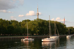 Toronto Evening Sailboats. Sailboats in the harbor with the CN Tower in the background Royalty Free Stock Photography