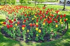 Toronto flower Stock Image