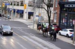 Toronto ha montato gli ufficiali di polizia Immagini Stock