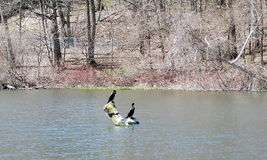 Toronto High Park Pond 2007 Royalty Free Stock Images