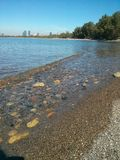 Toronto island beach Stock Photography