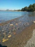 Toronto island beach. Waves shoreline Stock Photography