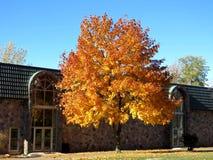 Toronto jesieni drzewo 2016 Obrazy Royalty Free