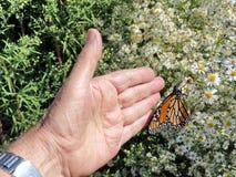 Toronto Jeziorny Monarchiczny motyl blisko ręki 2017 Fotografia Royalty Free