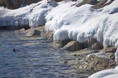 Toronto lake frozen shoreline Stock Photos