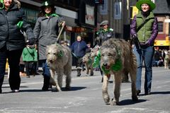 Toronto's annual St. Patrick�s Day parade Stock Photos
