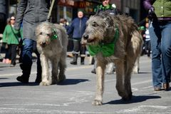Toronto's annual St. Patrick�s Day parade Stock Photo