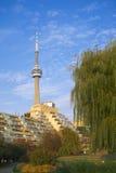 Toronto musikträdgård & CN-torn Arkivbild