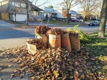 Toronto, Ontario, Canada - November 4, 2020: Old dried withered autumn fall leaves collected in paper recycle bags from Home Depot