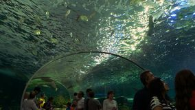 Public Aquarium Tunnel 2. Toronto, Ontario. May, 2017. People walking in the underwater tunnel of a public aquarium. Aquariums today can hold millions of liters stock footage