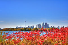 Toronto skyline. In fall colors royalty free stock photography