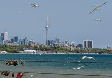 Toronto skyline and love locks Stock Image