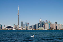 Toronto skyline with a swan Stock Photos
